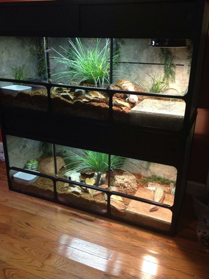 Blue Tongue Skink Enclosures By Cody Bryan Reptile