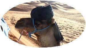 モロッコ 砂漠 らくだツアー