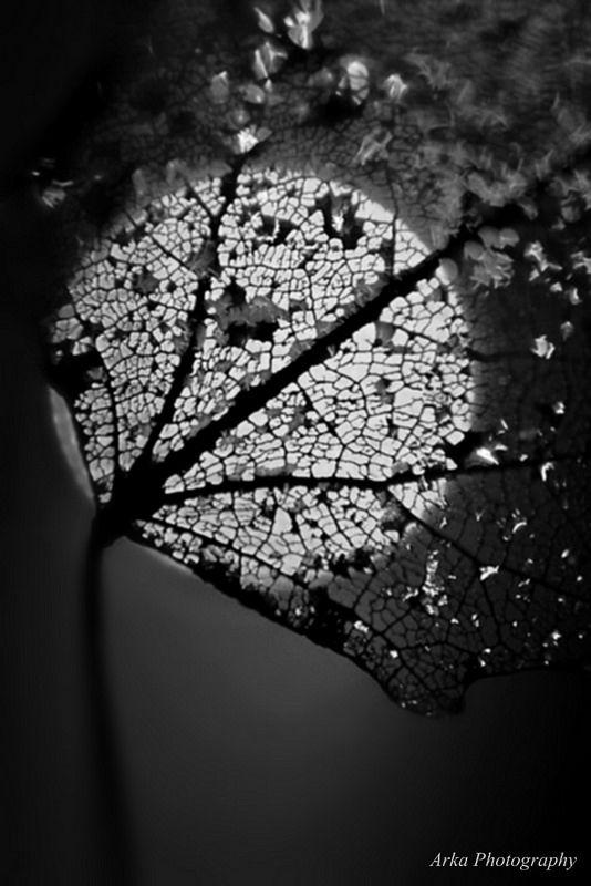 Fotografía en blanco y negro | Black & White photography | Luna llena - Full Moon
