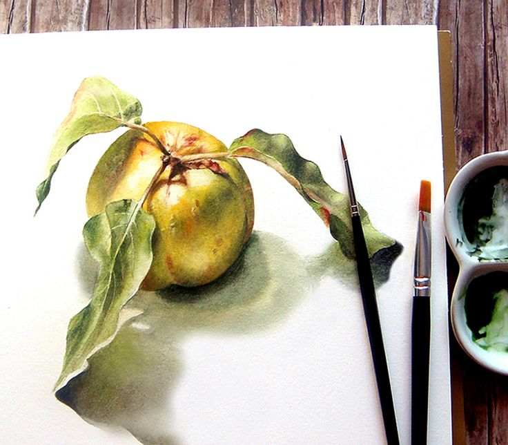 Quince. Watercolour on paper.  Gutuie. Pictura realista in acuarela. By Alina Draguceanu