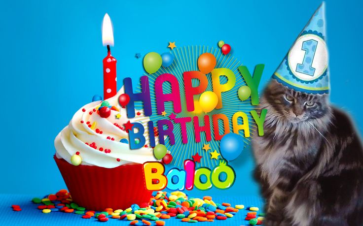 Happy first birthday,Baloo!  #happybirthday #happyfirstbirthday #buoncompleanno #mainecoon #cats
