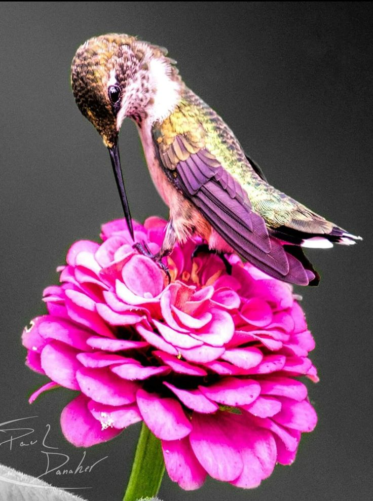 Best Hummingbird Pictures Ideas On Pinterest Humming Birds - Photographer captures amazing close up photos of hummingbirds iridescent feathers