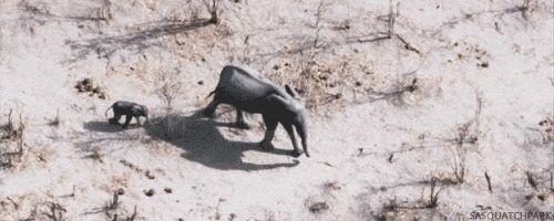 """Like nothing."" | 22 Baby Elephants Totally Nailing The Elephant Thing"