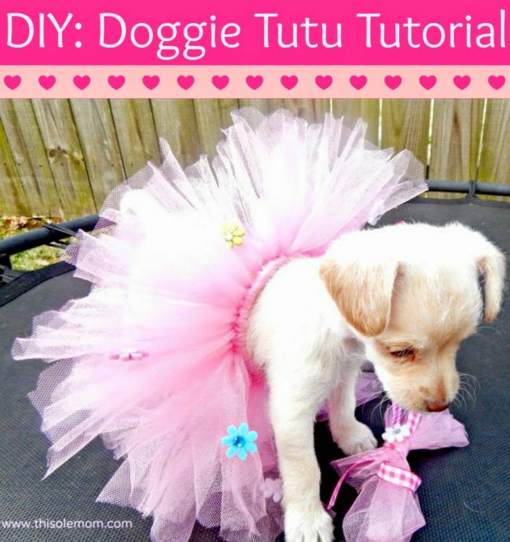 Make your pet their very own Tutu! I never thought in a million years I would be a pet parent that would dress their fur baby in a Doggie Tutu and other outfits! As soon as I took one look at my puppy's sweet face I knew I wanted to adopt her. She has quickly…