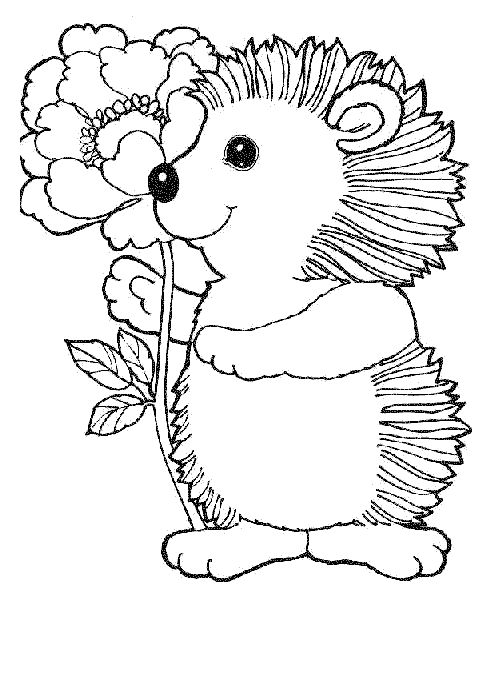Hedgehog Coloring Pages Pinterest