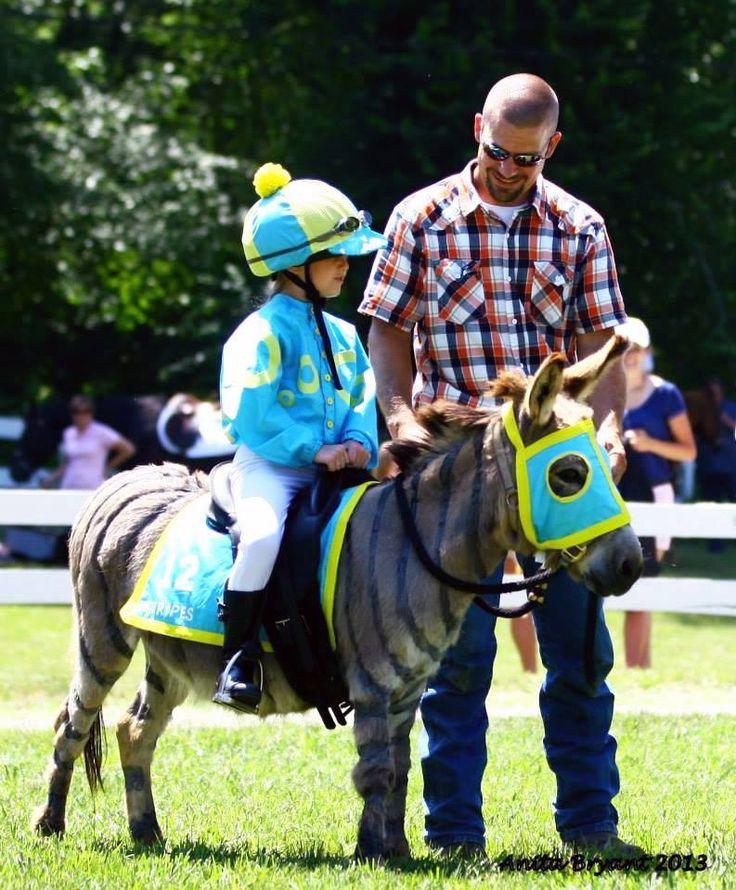 Costumes for Miniature Horses   Mini Horse Costume