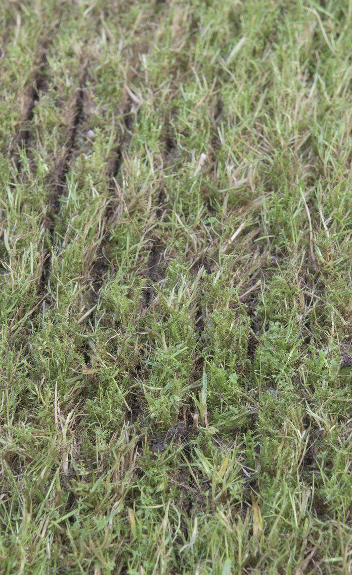 So Erneuern Sie Ihren Rasen Ohne Umgraben Rasen Nach Dem Vertikutieren The Post So Erneuern Sie Ihren Rasen O Container Gardening Vegetables Lawn Garden Care