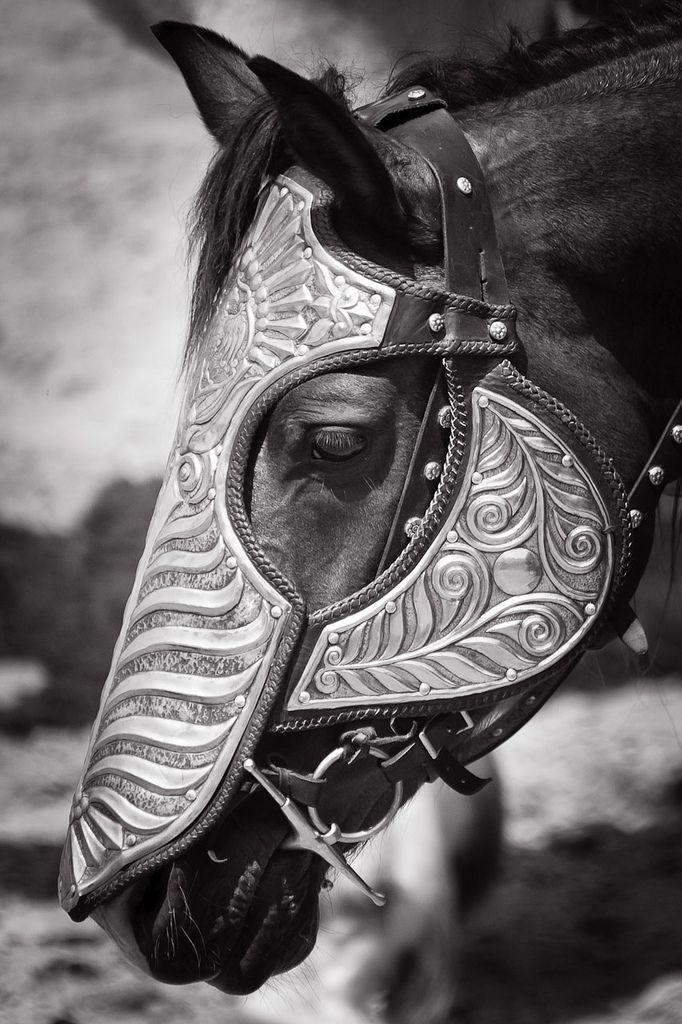 gorgeous head armor on a horse, barding