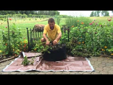 Kennebec Potato Grow Tub Harvest - YouTube