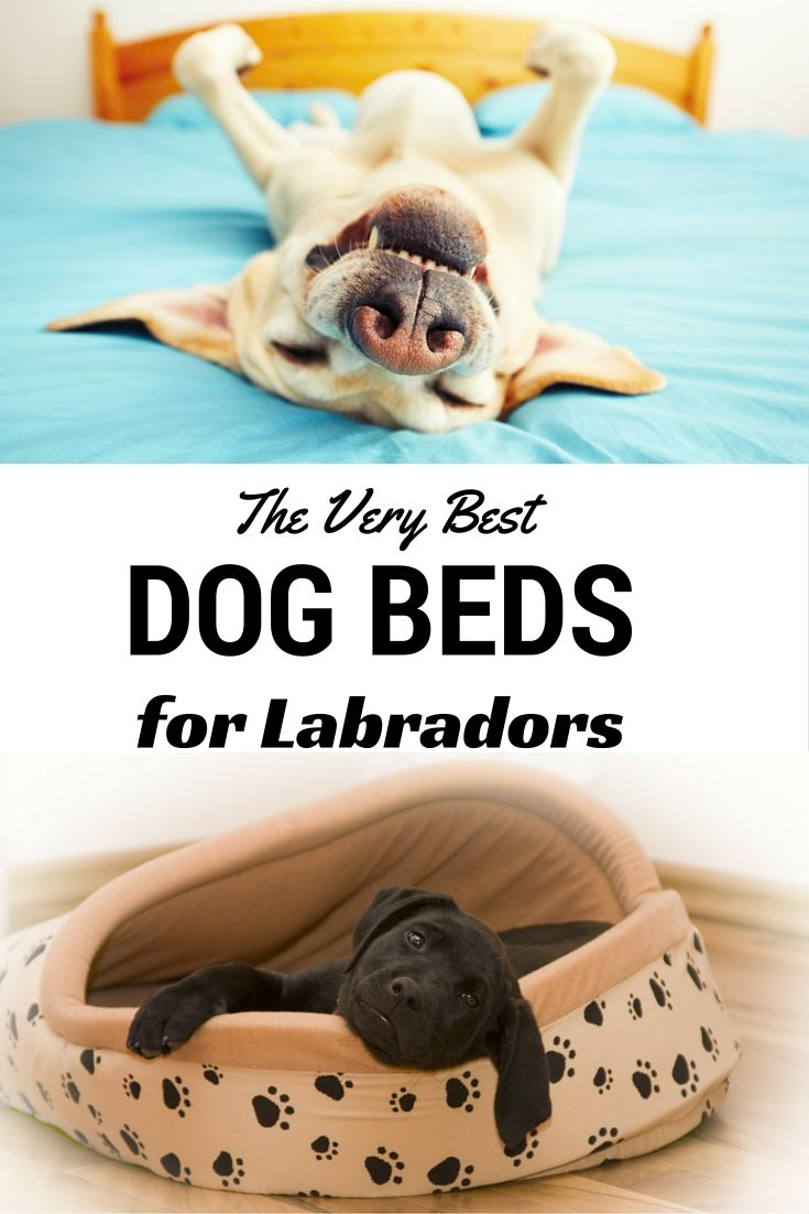 A look at the best dog beds for labs. From luxury dog beds to cheap dog beds…