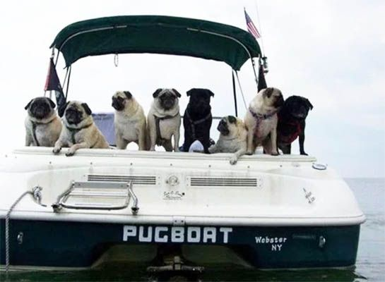 Cute Boat Names