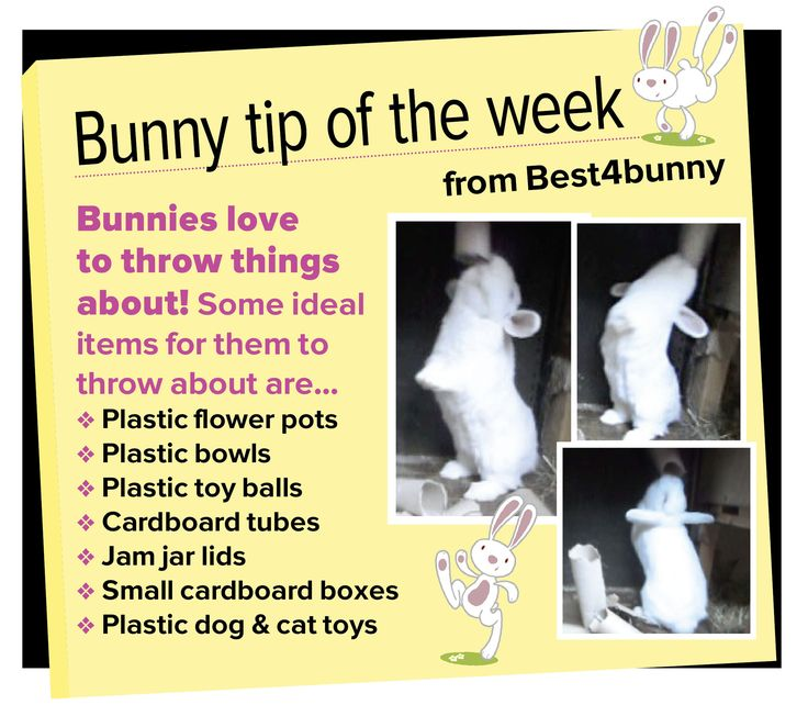 Bunny tip - week 13 Bunnies love to throw things about - keeps them entertained and their minds stimulated.