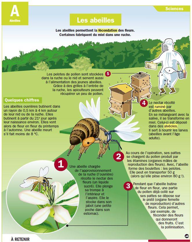 Fiche exposés : les abeilles                                                                                                                                                                                 Plus