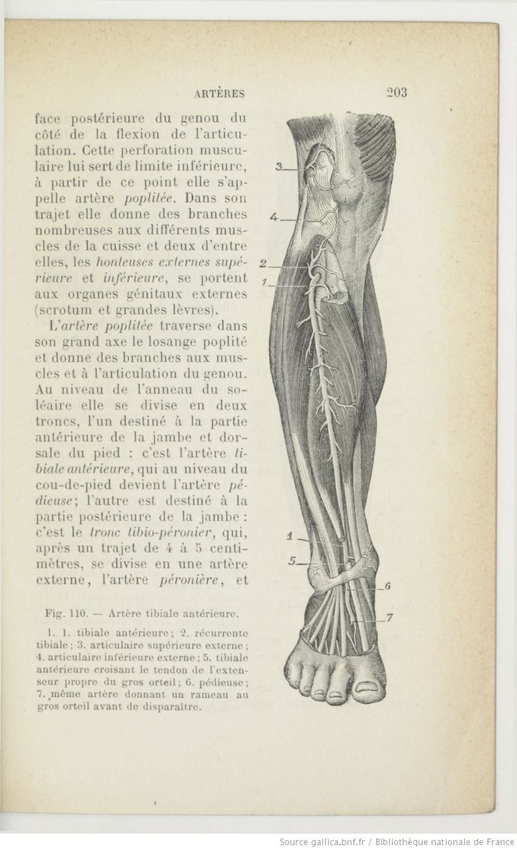 68 best Anatomie humaine images on Pinterest   Ark, Human anatomy ...