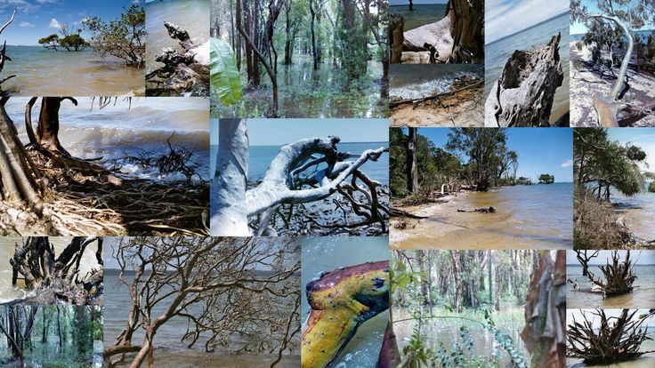 water timber
