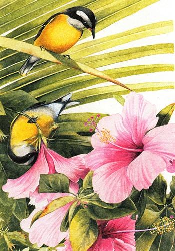 Marjolein Bastin Nature Sketches