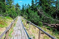 ZON-4387387 Bohlenweg Kaltenbronner Hochmoor Wildsee Schwarzwald Deutschland Kaltenbronner boardwalk bog Wildsee Black Forest Germany