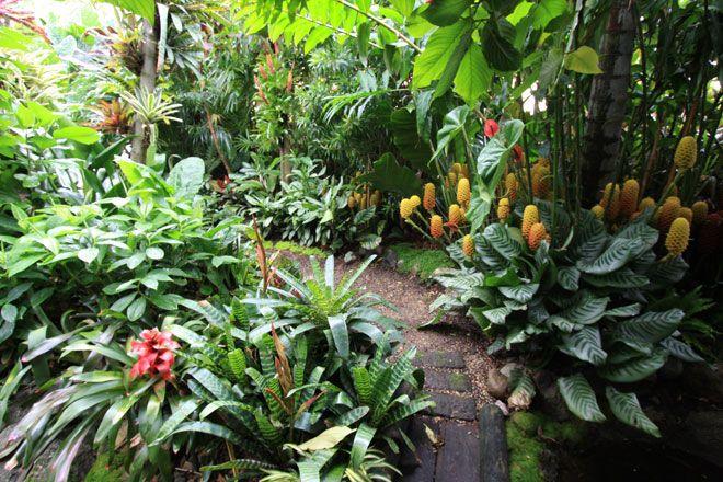 Tropical Garden love the ginger!