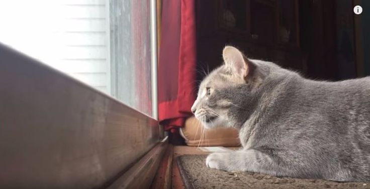 Owner catches cat mumbling to himself while hunting birds on the patio