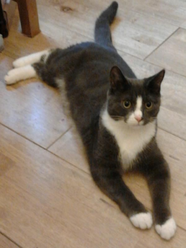 Lost on 13/03/2014 @ Dean Street Winsford. Missing Since Thursday 13 March 2014 Grey and White Male Kitten, 10 months old, Microchipped and Neutered. Last seen in garden on Dean Street, Winsford, Cheshire. If you have seen him please ph... Visit: https://whiteboomerang.com/?show=181wgn0 (Posted by Philip on 13/04/2014)