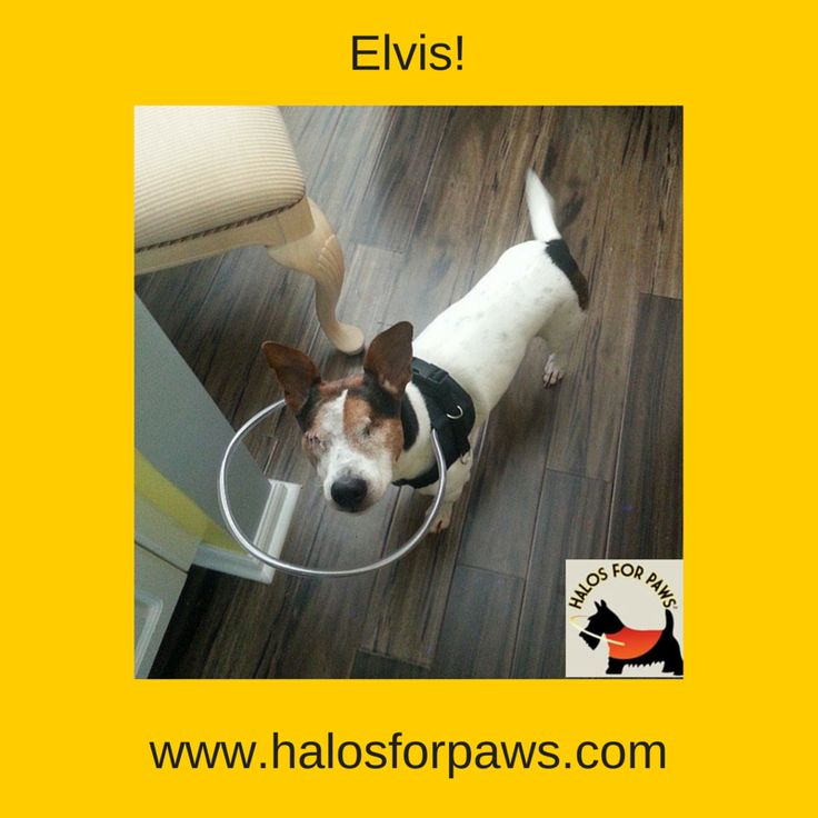 21 Best Our Happy Customers Dogs Wearing Their Halo Vest