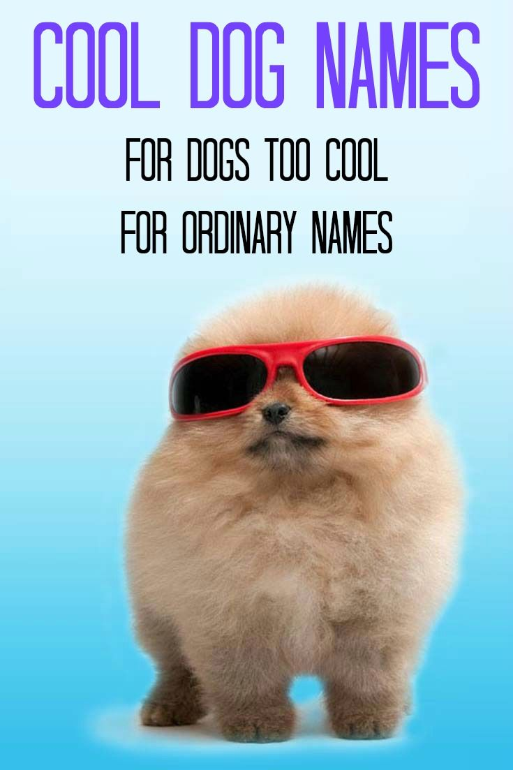 This Pomeranian badboy thinks it deserves a cool dog name... http://www.dog-names-and-more.com/Cool-Dog-Names.html