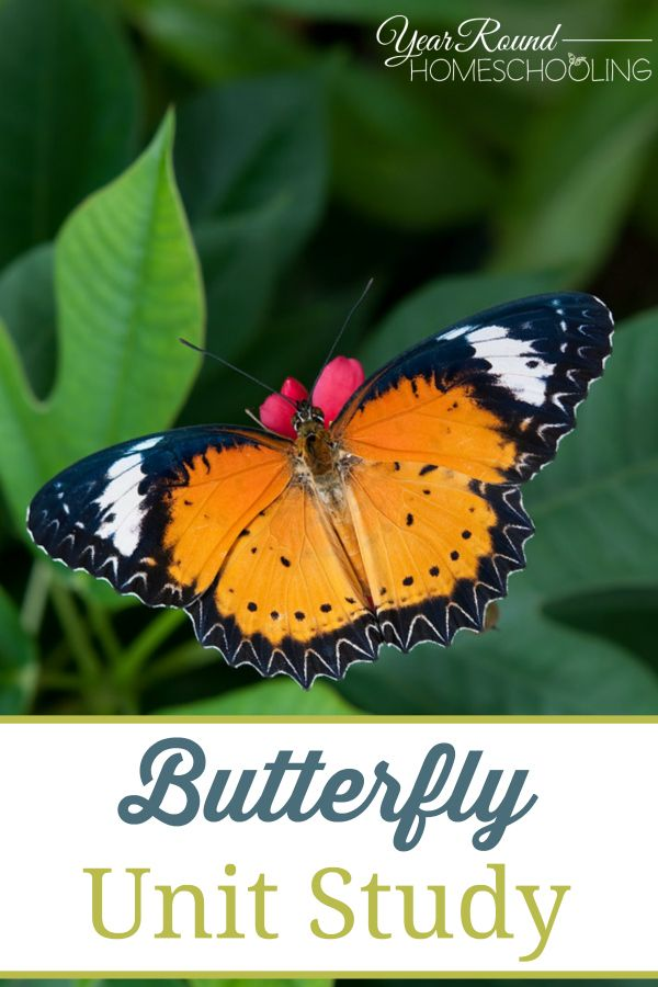 The study of butterflies | Peter Smetacek - Academia.edu