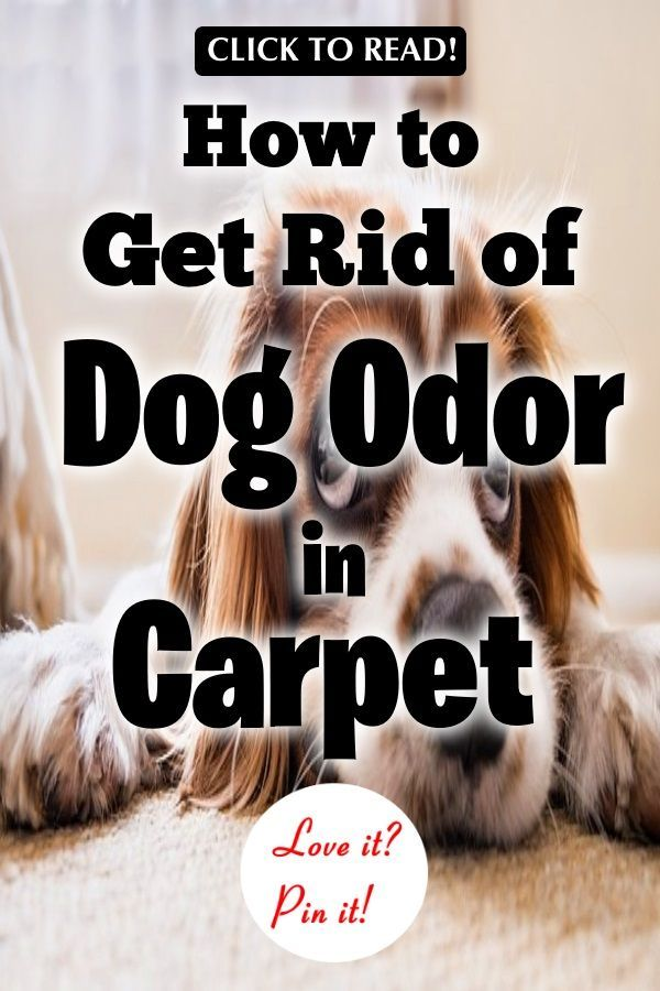 How To Get Rid Of Dog Odor In Carpet 13 Tips That Work Dog