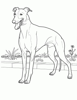 free coloring pages dog breeds - photo#48