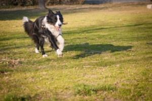 Adottare un cane: tenerlo in casa od in giardino?  http://www.chioggiatv.it/2013/01/adottare-un-cane-tenerlo-in-casa-od-in-giardino/