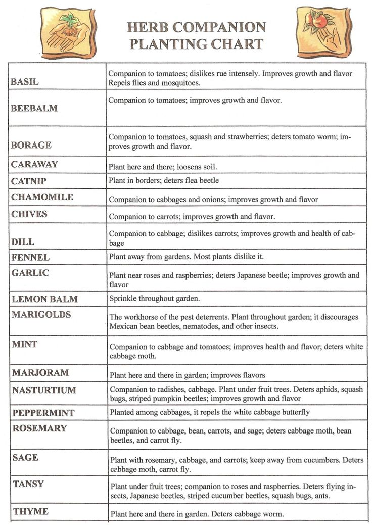Herb Companion Planting Chart Herbal Gardens 15550890 By