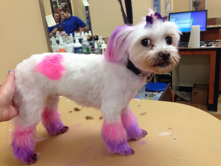 14 Best Images About Petexpressions On Pinterest Pink