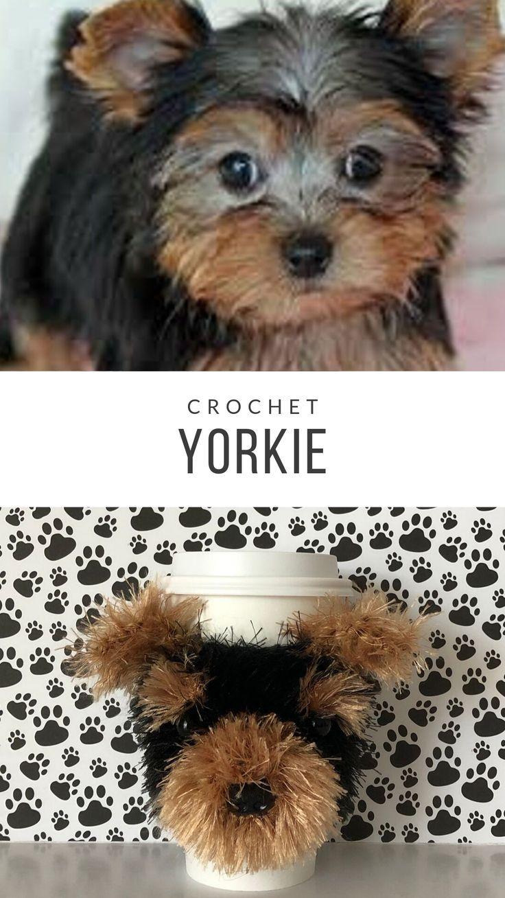 Common Traits Of Yorkies Cuteness