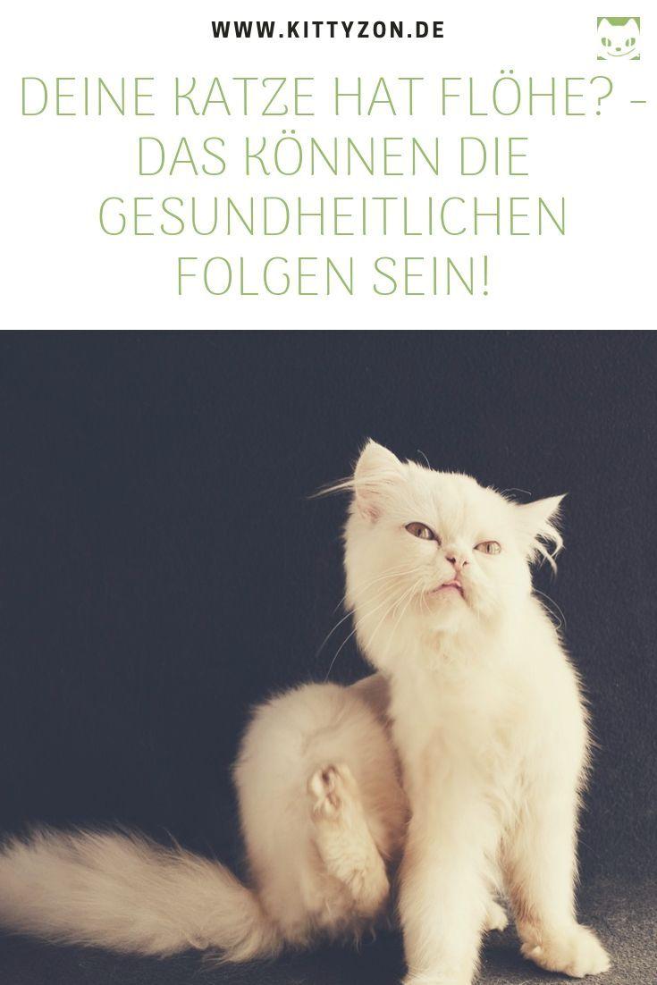 Hat Deine Katze Flohe So Kannst Du Sie Erfolgreich Bekampfen
