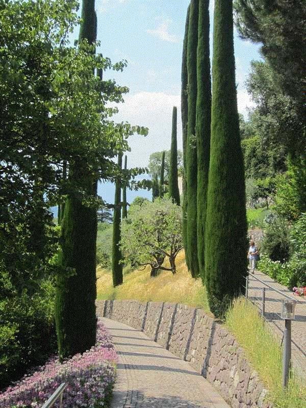 Italian cypress cupressus sempervirens 39 stricta for Jardines italianos