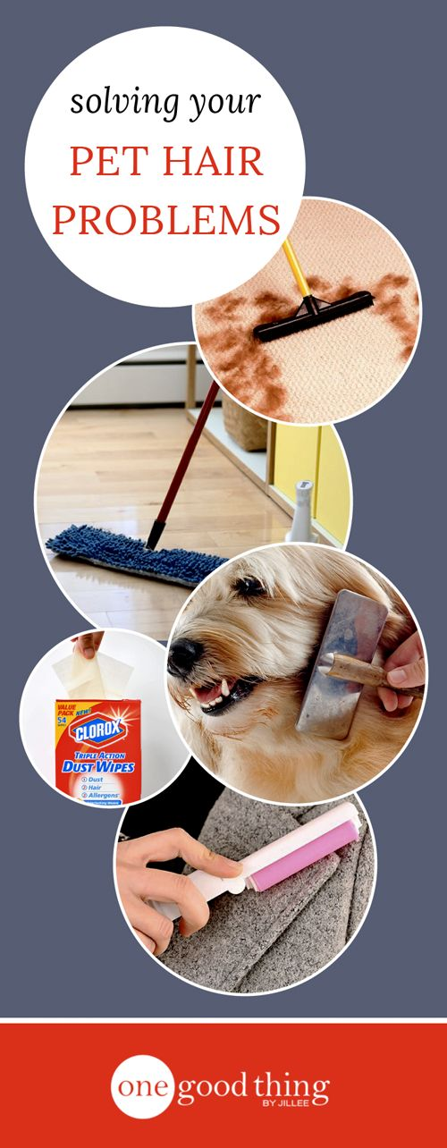 Removing pet hair from clothing, furniture, carpeting, etc is a never-ending challenge, but check out our tips for removing it with ease!