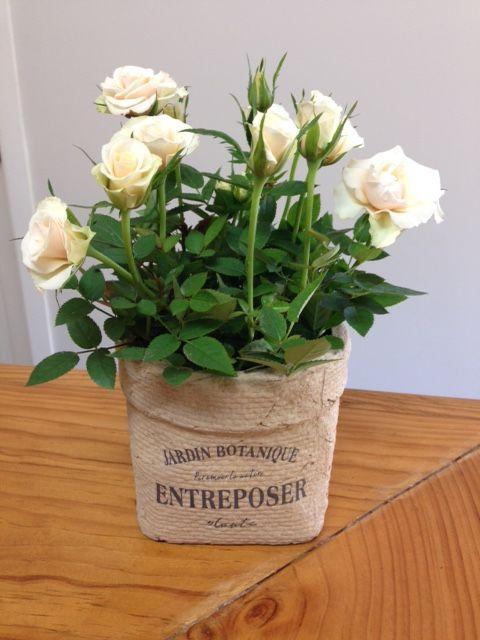 'Jardin' Ceramic *new range*  french provincial themed hessian look ceramic pot filled with flowering roses http://www.summerhillnurseries.com.au/www/content/default.aspx?cid=1805&fid=670
