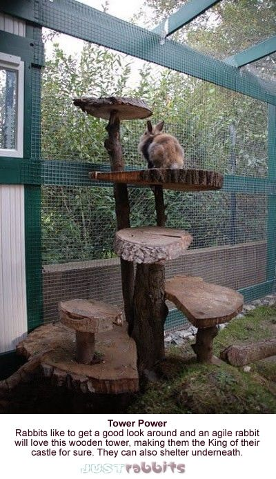 Rabbits can be the King of their bunny kingdom with this easy to make rabbit tower, they can shelter underneath too.