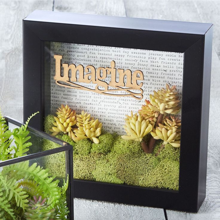 Add a new twist to traditional terrariums when you make this Imagine Terrarium Shadow Box