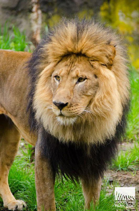 Mammals - Woodland Park Zoo Seattle WA