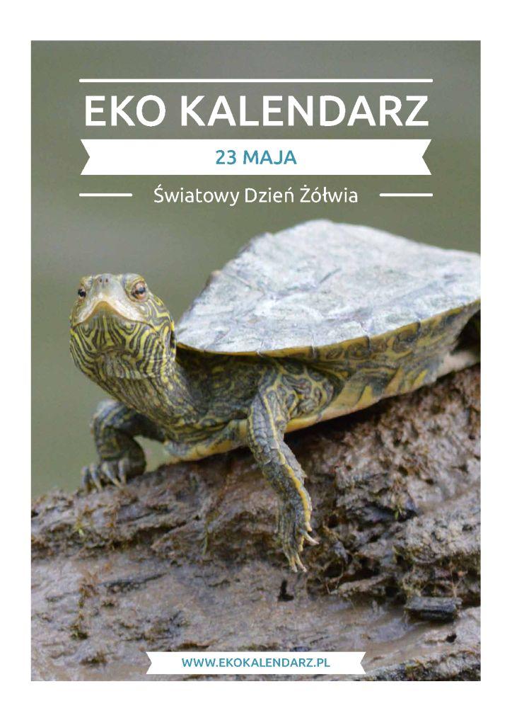 Dzień Żółwi – pakiet edukacyjny