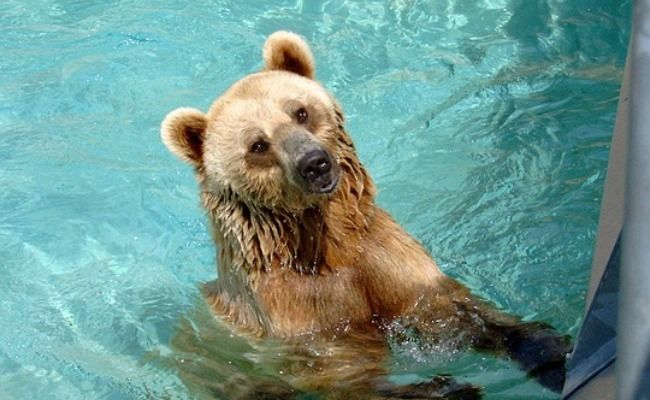 How We Can Protect Wildlife From Swimming Pools - For the LOVE OF THE WILD, pass it on............