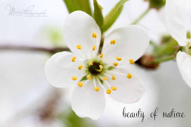 Beauty of nature