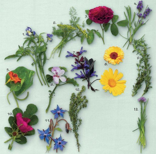 Spiselige blomster - stedmor, rose, dild, citrontimian, purløgsblomst