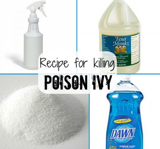 How to Kill Poison Ivy and Other Weeds - combine salt, vinegar and Dawn in a bottle and spray on the weeds - Homestead Crossing Inc's Blog