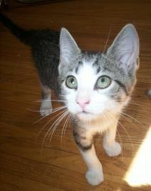 Daisy, waiting for a home at Lollypop Farm. Saturday, June 30th, fees will be waived for all cat and kitten adoptions.