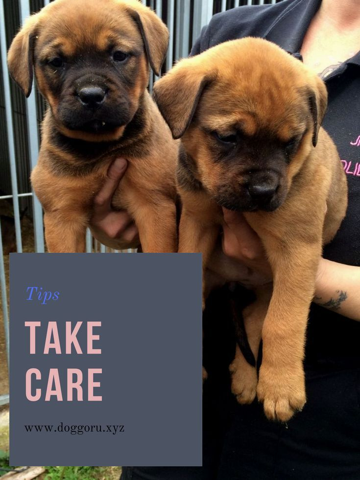 The right way to take care of newborn puppies | puppies