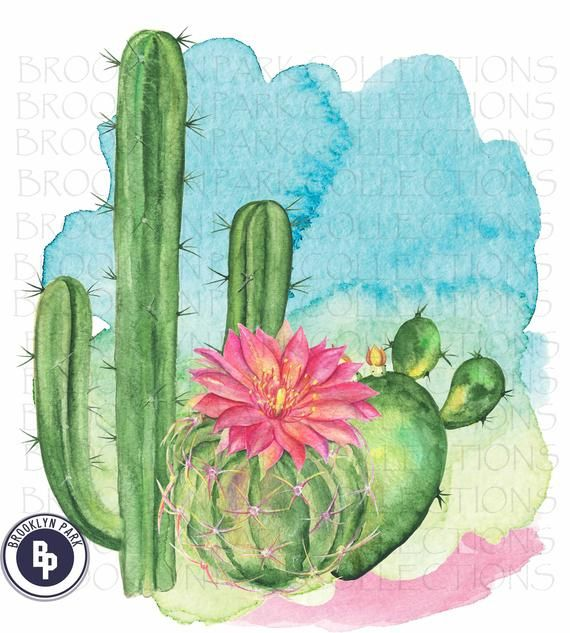 Cactus Watercolor Splash Sublimation Transfer Ready To Press In