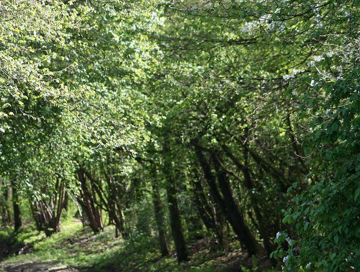 So schade: Der Aaper Wald wird um 440 Bäume ärmer, weil eine alte Gasleitung saniert wird. http://www.neue-duesseldorfer-online-zeitung.de/stadtnachrichten/baumfaellungen-wegen-der-gasleitung/#utm_sguid=149230,49068120-05fe-10f3-e26d-5b5942135f26