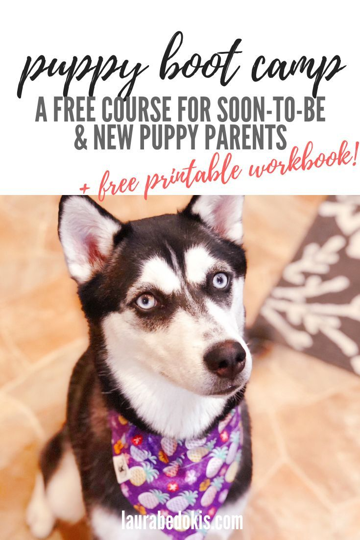 New Puppy Boot Camp Free E Course New Puppy Basics New Puppy Guide New Puppy New Puppy Essentials New Puppy Workbook Tips And Tricks For Pets New P